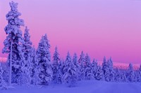 Winter Sunset in Finland Fine-Art Print