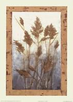 Plume Grasses Fine-Art Print