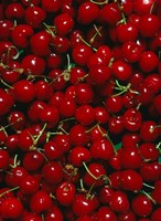 Cherries, Normandy, France Fine-Art Print