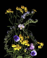 Pansy, Rosemary & French Tarragon Fine-Art Print