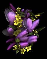 Tulip Magnolia & Jasmine Fine-Art Print