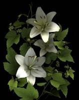 White Lilies '06 Fine-Art Print