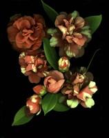 Camellia 3 Fine-Art Print