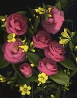 Camellia 2 Fine-Art Print
