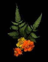 Ferns & Marigolds Fine-Art Print