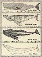 Scrimshaw Whale Fine-Art Print