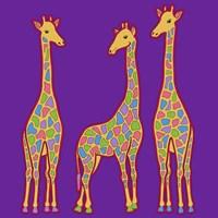 3 Giraffes Fine-Art Print