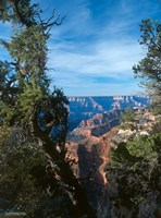 Grand Canyon E Fine-Art Print