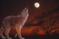 White Wolf And Full Moon Fine-Art Print