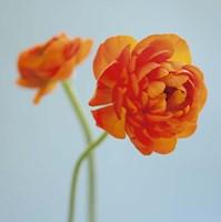 Orange Delight I Fine-Art Print