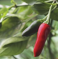 Chilies Fine-Art Print