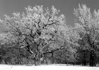 Winter Frost 4 Fine-Art Print