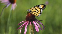 Shades Of Nature Butterfly And Flower I Fine-Art Print