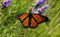 Shades Of Nature Orange Butterfly Fine-Art Print