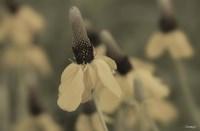 White Flower In Field Closeup I Fine-Art Print