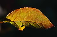 Shades Of Nature Leaf Fine-Art Print