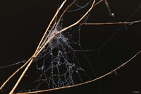 Spider Web Covered In Dew Fine-Art Print