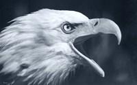 Bald Eagle 4 Fine-Art Print