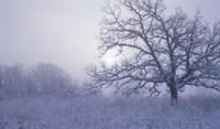 Snow Terrain Tree VI Fine-Art Print