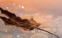 Fall Leaf Floating In Water Bubbles I Fine-Art Print