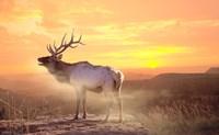 Elk Sunrise In The Badlands Fine-Art Print