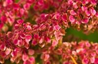 Pink Leaves Clustered On Branch Fine-Art Print