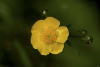 North Shore Yellow Flower Fine-Art Print