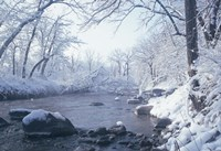 Buffalo River Snow 45 Fine-Art Print