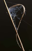Web On Brown Grass Blade Fine-Art Print