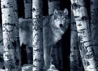 Silver Tone Moon Shadows Fine-Art Print