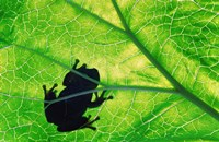 Frog Silhouette On Leaf Fine-Art Print
