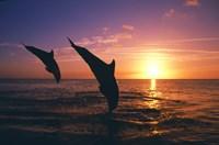 Dolphin Sunset Dive Duo Fine-Art Print