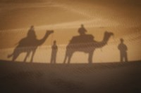 Camels In Desert Silhouette Fine-Art Print