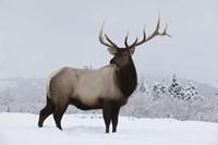 Brown To Beige Reindeer Fine-Art Print