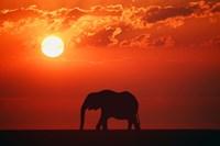 Elephant Sunset Silhouette Fine-Art Print