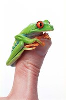 Green Frog On Thumb Fine-Art Print