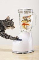 Cat's Fish Shake Fine-Art Print