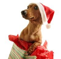 Santa's Puppy Gift Fine-Art Print