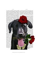 Black Labrador with Roses Fine-Art Print
