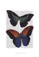 Butterflies 4 Fine-Art Print