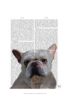 White French Bulldog Plain Fine-Art Print