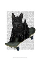 Scottish Terrier and Skateboard Fine-Art Print
