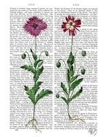 Italian Carnation 3 Fine-Art Print