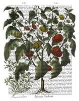 Peppers 2 Fine-Art Print