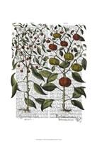 Peppers 4 Fine-Art Print