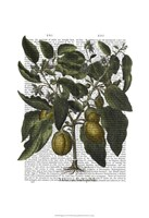 Peppers 6 Fine-Art Print