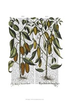 Peppers 7 Fine-Art Print