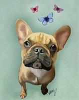 Brown French Bulldog and Butterflies Fine-Art Print