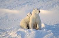 Mother Polar Bear and Cub I Fine-Art Print