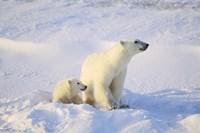 Polar Bear Family Fine-Art Print